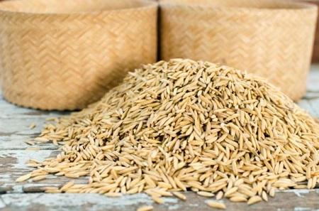 ۴۵ تن بذر برنج به شالیکاران آستارا توزیع شد