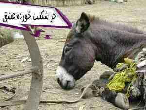 تعجب نکنبد خر هاام شکست عشقی میخورن