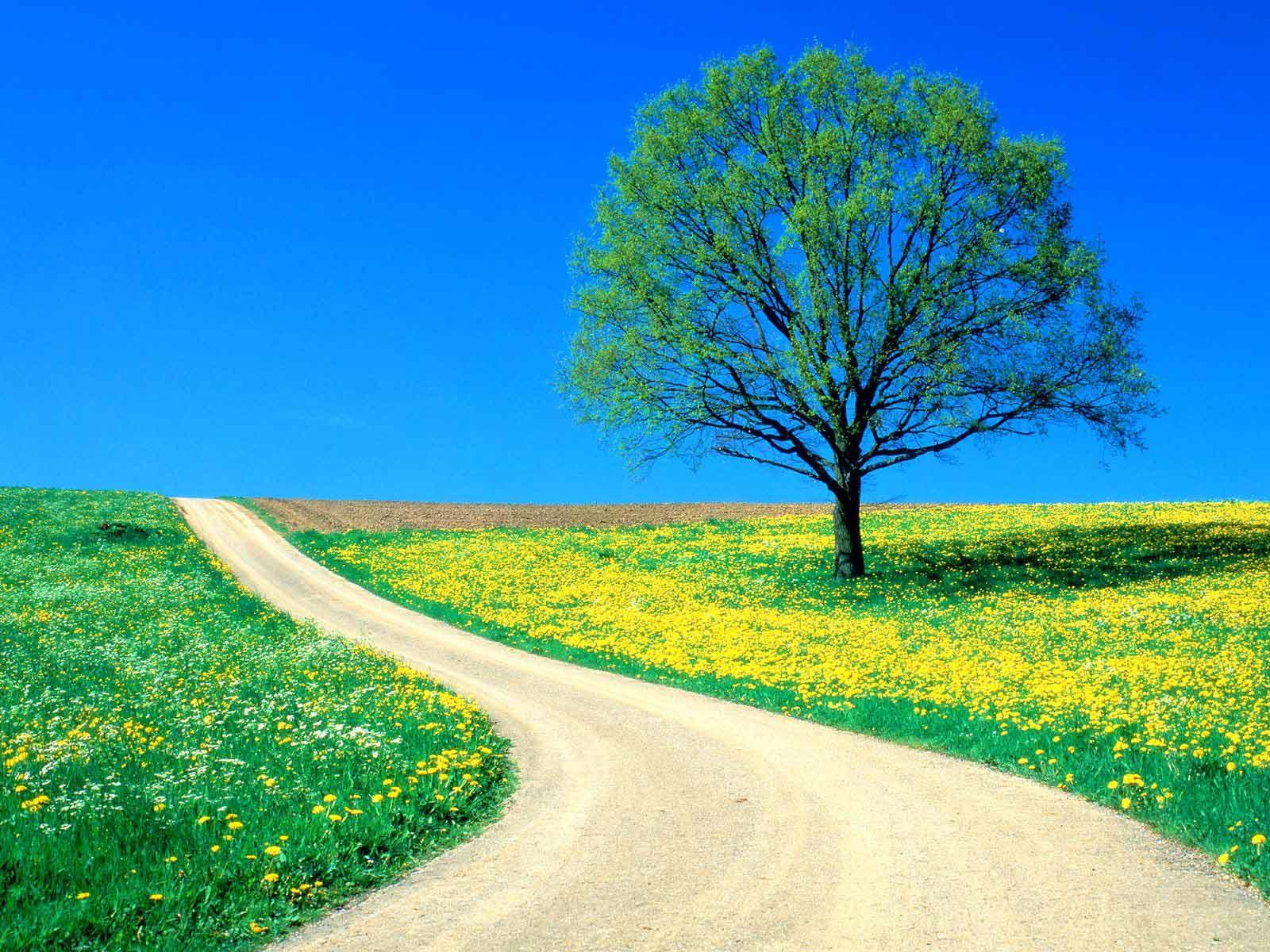 عکس هایی زیبا و رؤیایی از طبیعت با کیفیت بالا!