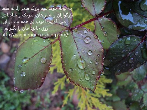 سلام بر لحظات نزول رحمت الهی...(محمدرضا باقرپور)