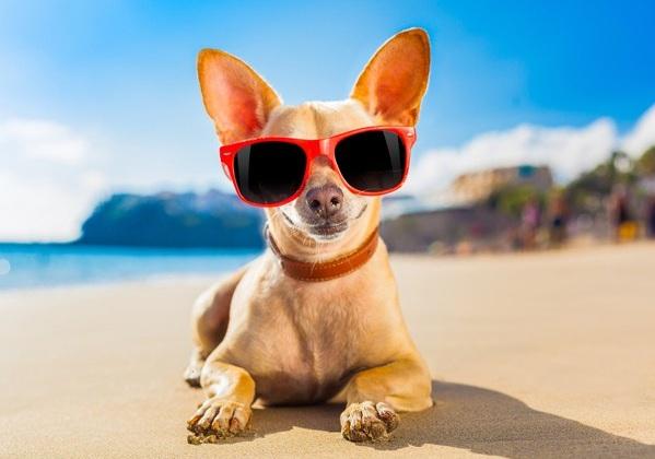 7 راه برای محافظت از چشمان در تابستان