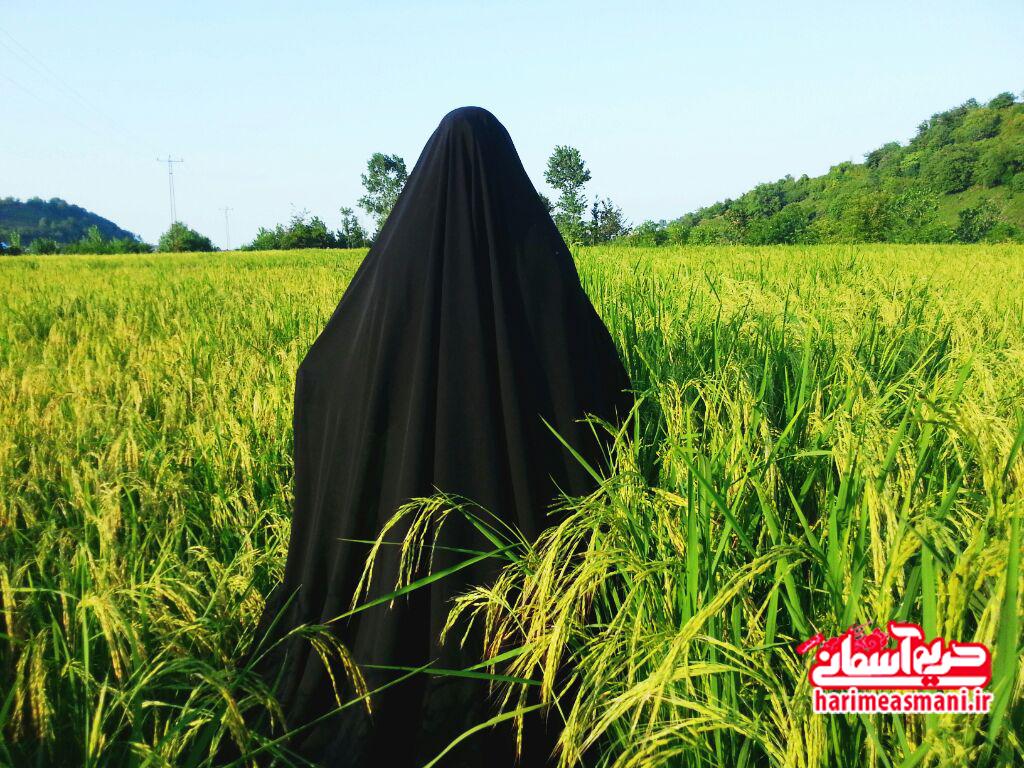 مزرعه برنج