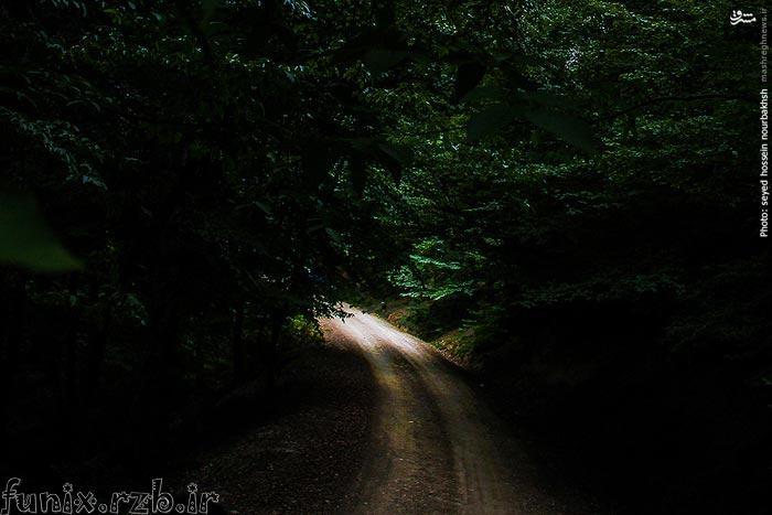 بهشتی پنهان در اعماق جنگلهای مازندران