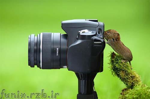 حیواناتی که عاشق عکس و عکاسی هستند!
