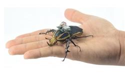 توسعه حشرات سایبورگ+عکس