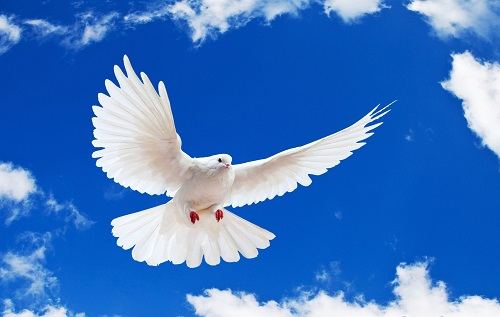 صلح واقعی