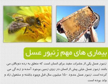 آموزش پیشرفته پرورش زنبور عسل  (تصویری) زنبور داری / اورجینال