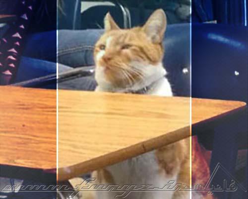 گربهای که کارت دانشجویی گرفت! + عکس