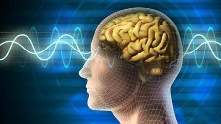 آیا می دانید کدام یک از جانداران بزرگترین مغزها را دارند؟