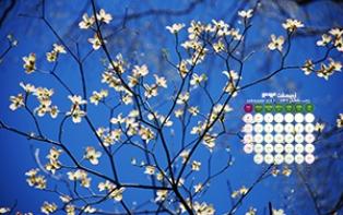 3-dogwood blossoms-low.jpg (314×197)