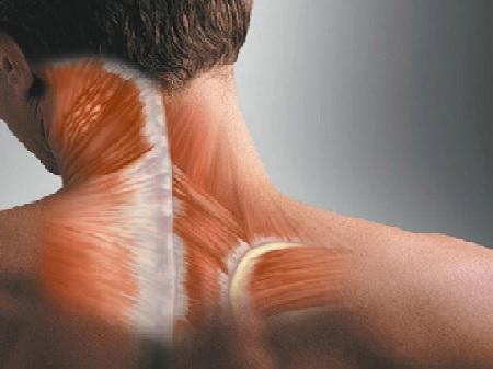 ارگونومی عضلات سر و گردن