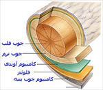 پروژه شناخت چوب و انواع آن