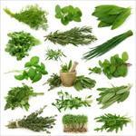 اصول پرورش گیاهان دارویی