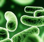 بهینه سازی فعالیت میکروارگانیسم ها در تصفیه فاضلاب