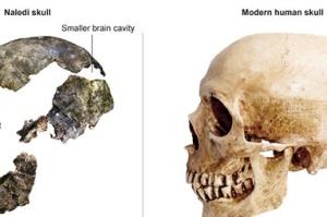 کشف اسکلت های عجیب از انسان های اولیه + عکس