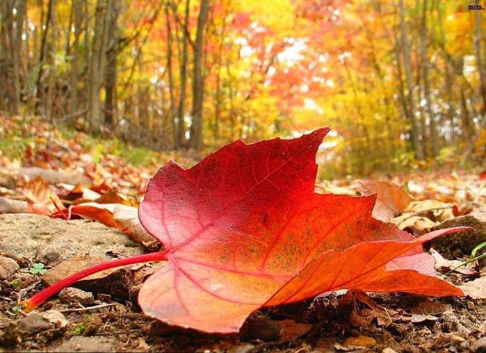 در پاییز چی بپوشیم