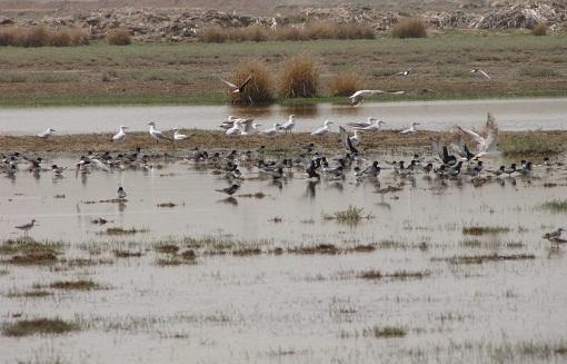 مهمترین چشمه تأمین کننده آب تالاب کانی برازان مهاباد خشک شد