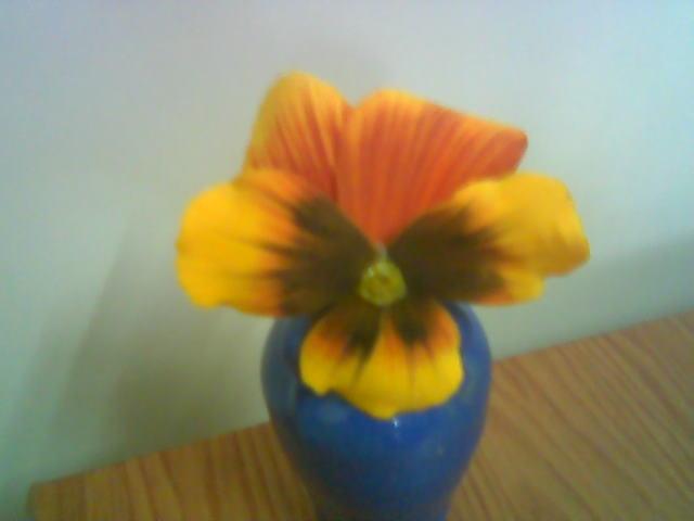 آموزش گل بلندر بنفشه