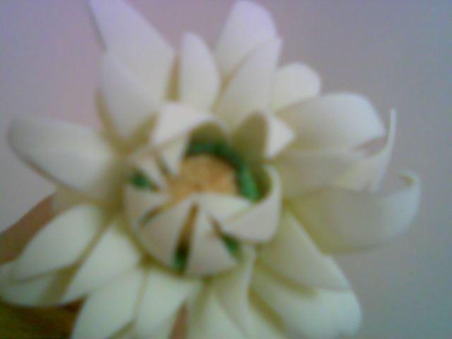 آموزش گل بلندر مارگیریت