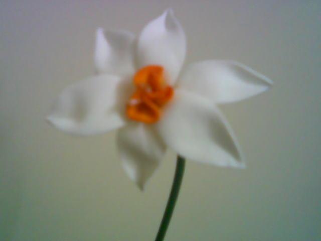 آموزش گل بلندر نرگس شیرازی