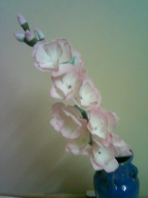 آموزش گل بلندر شب بو