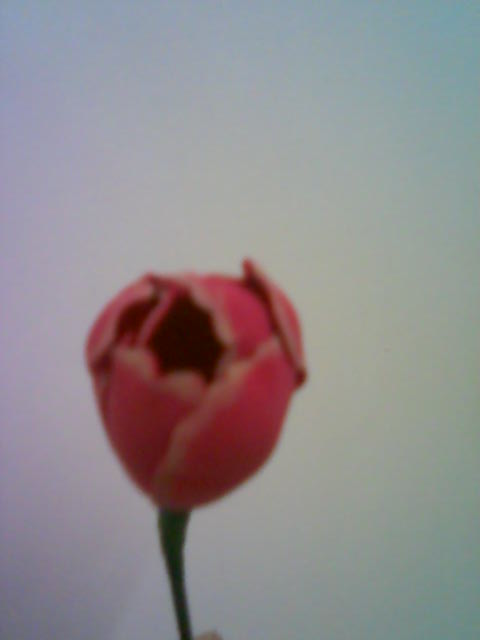 آموزش ساخت گل لاله با تصویر