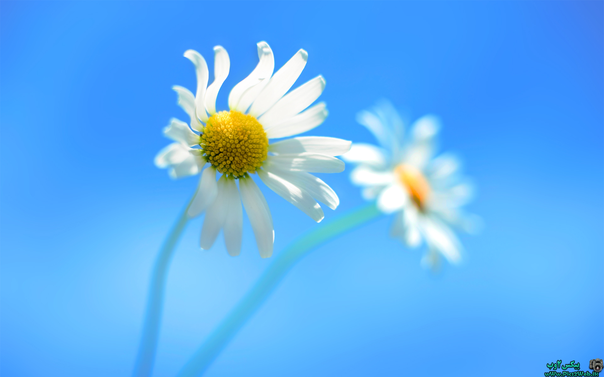 عکس پس زمینه گل ویندوز 8