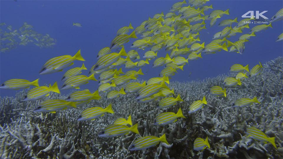 دانلود کلیپ Sony - Aquarium Ultra-HD آکواریوم با کیفیت 4K ULTRA HD