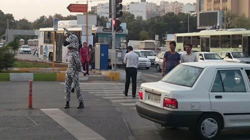 گورخری که در شیراز آموزش ترافیک میدهد !