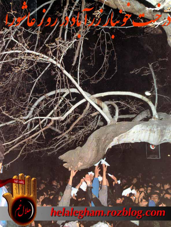مستند معجزه اشک خون درخت چنار زرآباد در عاشورا