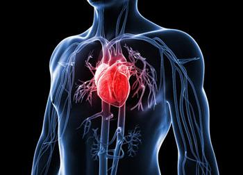 عادتهای نادرستی که سلامت قلب را به خطر می اندازد