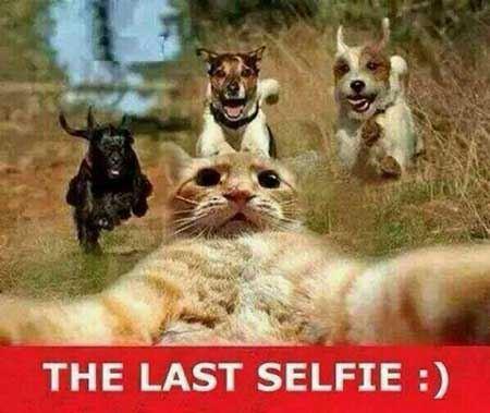 عکس های بسیار خنده دار و دیدنی از همه جا