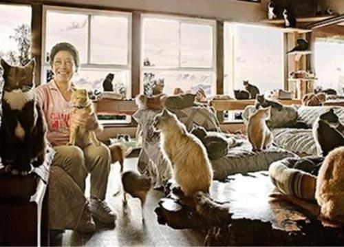 این خانم با 130 گربه زندگی می کند!! (عکس)