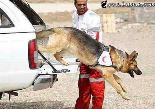 این سگ با کارش ایران را لرزاند (عکس)