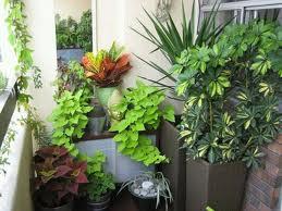 خرید گیاهان آپارتمانی و مراقبتهای بعد از خرید