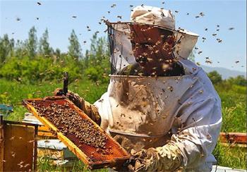 76هزار کیلو عسل اردبیل به کشورهای آسیایی صادر شد