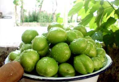 گوجه سبز , خواص گوجه سبز, املاح گوجه سبز