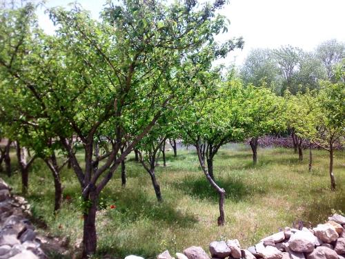 طبیعت سیه کلان - باغ های روستای سیه کلان