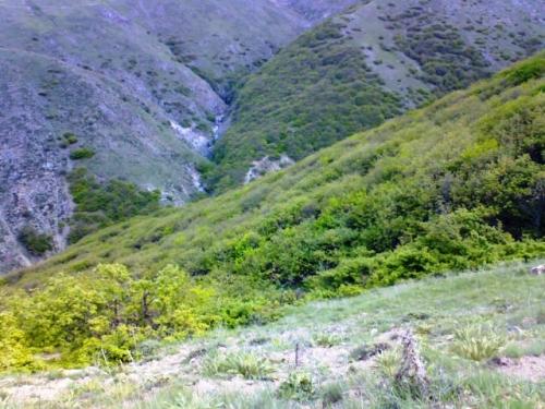 جنگل های سیه کلان و سونگون