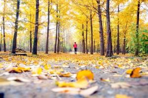 عکس های پاییزی بسیار زیبا