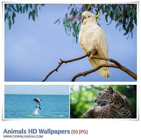مجموعه ۴۰ والپیپر زیبا با موضوع گیم Games HD Wallpapers