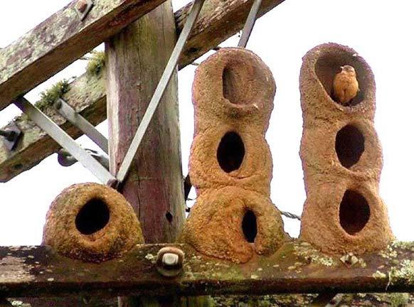 معماران چيره دست دنياي جانوران