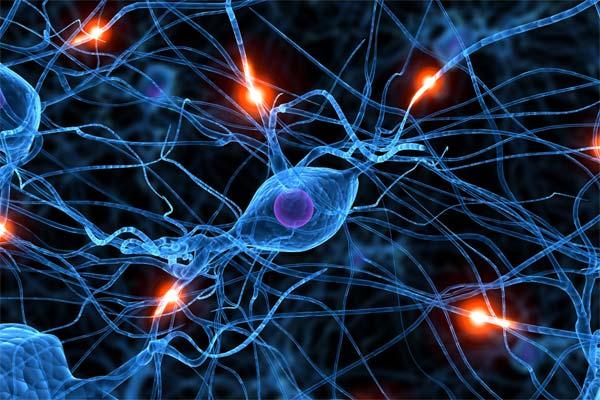 کاوش پيرامون مغز