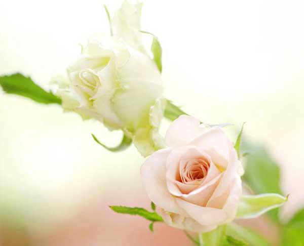 گل هاي زيبا