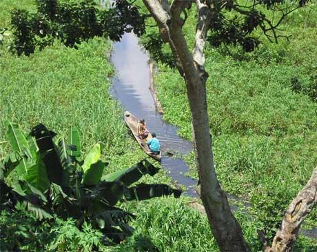 طبیعت زیبای آمازون