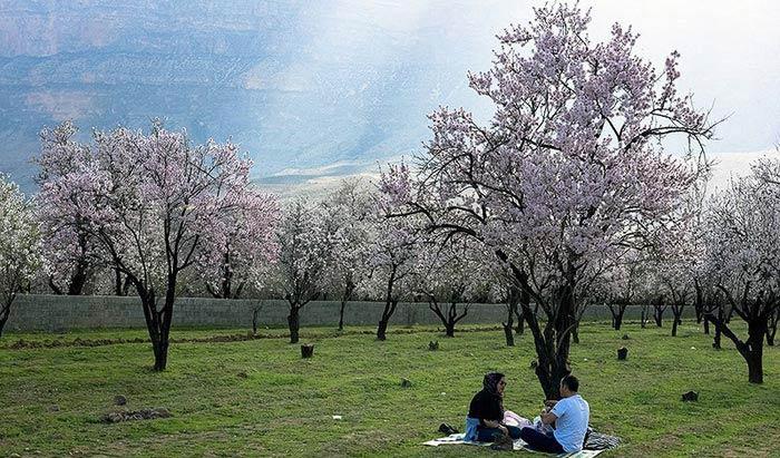 شکوفه هاي بهاري در شيراز