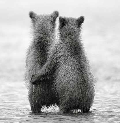 عشق در طبیعت