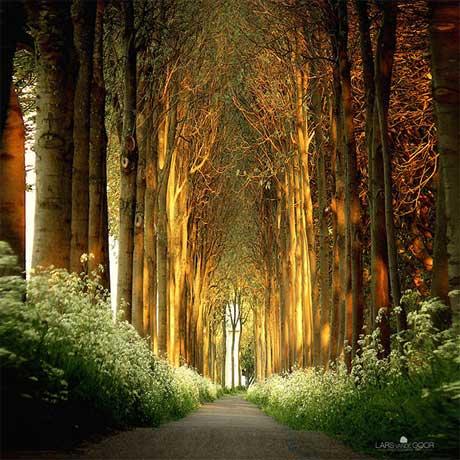 تونل درختی
