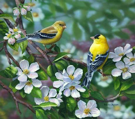 نقاشی پرنده