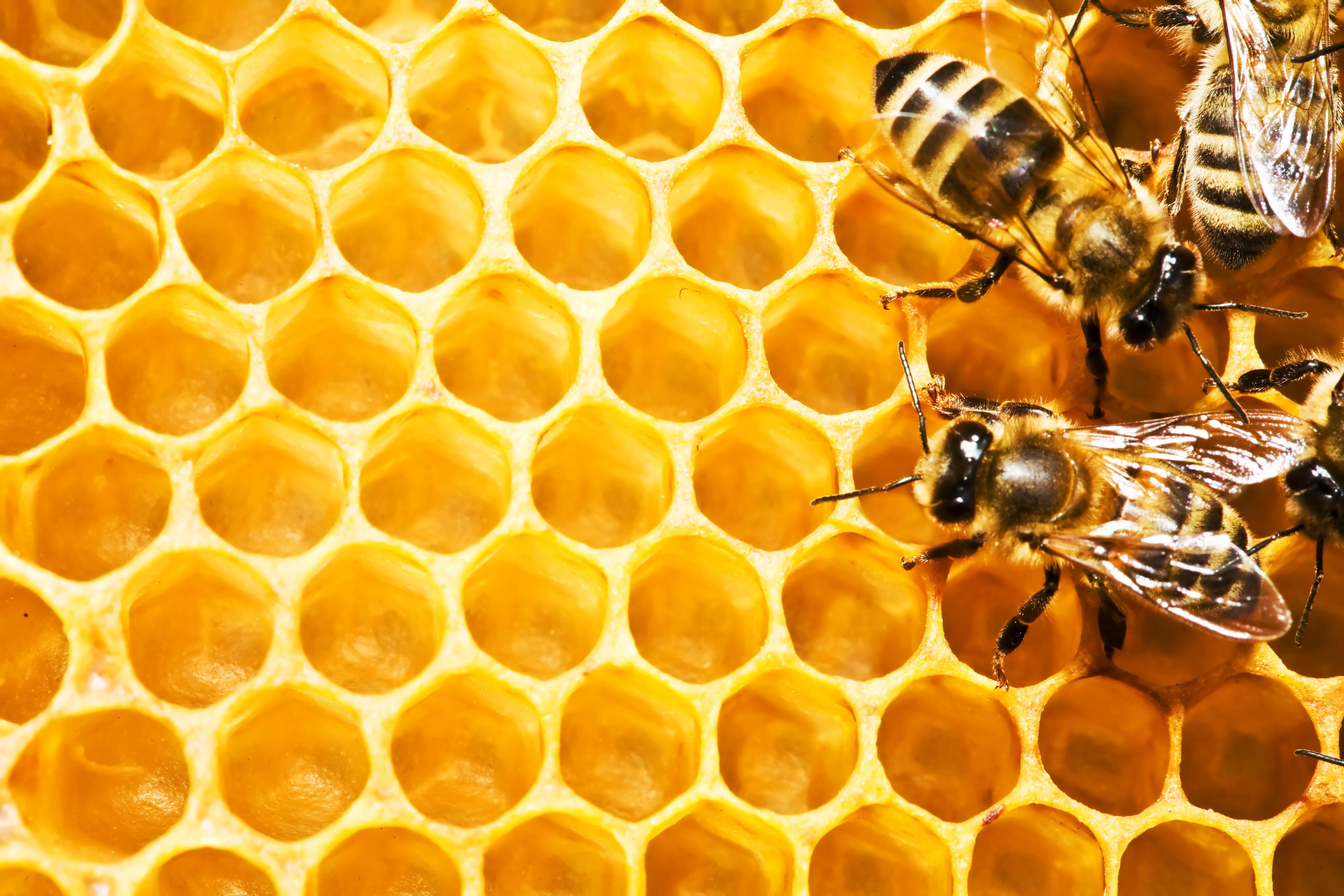 کندوی زنبور عسل